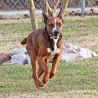 Adopt A Pet :: Richard - Savannah, TN