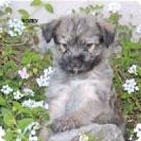 Adopt A Pet :: Rocky - Ashville, OH