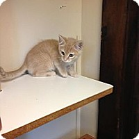 Adopt A Pet :: Harvey - Lancaster, MA