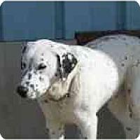 Adopt A Pet :: Spot - Milwaukee, WI