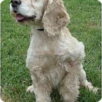 Adopt A Pet :: Erin - Sugarland, TX