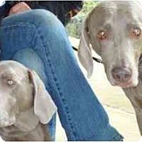 Adopt A Pet :: Hans & Elsa - Attica, NY