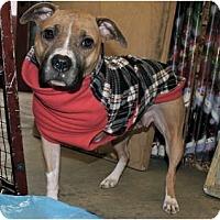 Adopt A Pet :: Ripley - Pittsbugh, PA