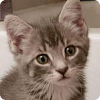 Adopt A Pet :: Kate - Reston, VA