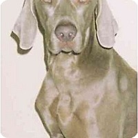 Adopt A Pet :: Austin  **ADOPTED** - Eustis, FL