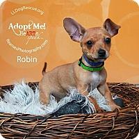 Adopt A Pet :: Robin - Shawnee Mission, KS