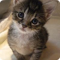 Adopt A Pet :: Tipper - Stafford, VA