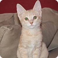 Adopt A Pet :: Carlos - San Antonio, TX