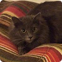 Adopt A Pet :: Galen - Smithfield, NC