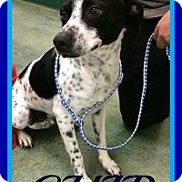 Adopt A Pet :: CHIP - Halifax, NS