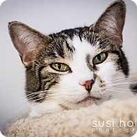 Adopt A Pet :: Skidoo - Colorado Springs, CO