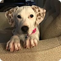 Adopt A Pet :: Lacy - Jasper, GA