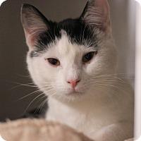 Adopt A Pet :: Mandy - Carlisle, PA