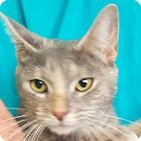 Adopt A Pet :: Beatrix - Colonial Heights, VA