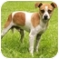 Photo 1 - Chihuahua/Rat Terrier Mix Dog for adoption in Chicago, Illinois - Spunky