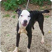 Adopt A Pet :: Skylar - Chicago, IL