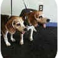 Adopt A Pet :: Jake Albert - Phoenix, AZ