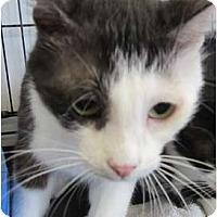 Adopt A Pet :: Jolie - Bunnell, FL