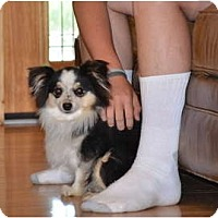 Adopt A Pet :: Izzy - New Boston, NH