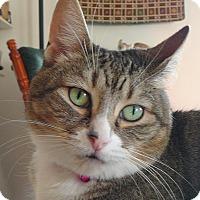 Adopt A Pet :: Brooke - Springfield, PA
