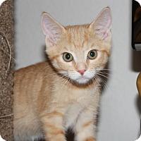 Adopt A Pet :: Ava - Irvine, CA