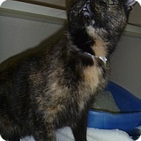 Adopt A Pet :: Alexis - Hamburg, NY