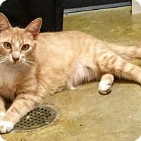 Adopt A Pet :: Watson - McDonough, GA
