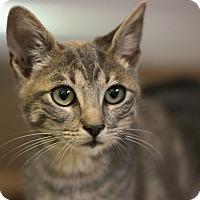 Adopt A Pet :: Oliver - Canoga Park, CA