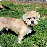 Adopt A Pet :: HERMIE - richmond, VA