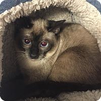 Adopt A Pet :: Birdie - Lunenburg, MA