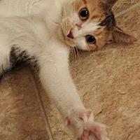 Adopt A Pet :: Sassafras - Tampa, FL