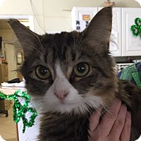 Adopt A Pet :: Gucci - Middletown, NY