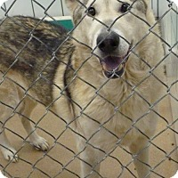 Adopt A Pet :: 49403 King sponsored $10 plus tags - Zanesville, OH