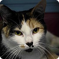 Adopt A Pet :: Nut 'N Honey - Chicago, IL