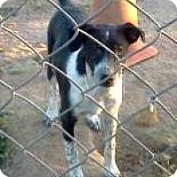 Adopt A Pet :: Moe - Tonopah, AZ