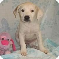 Adopt A Pet :: Ariel - South Jersey, NJ