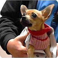 Adopt A Pet :: Rio - Rescue, CA