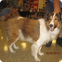 Adopt A Pet :: Cubby - apache junction, AZ
