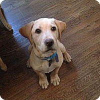 Adopt A Pet :: Max - Denver, CO