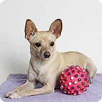 Adopt A Pet :: Henny Penny - Oakland, CA
