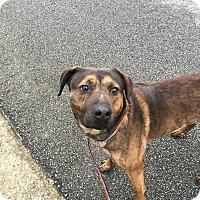 Adopt A Pet :: Duke - Jay, ME