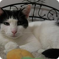 Adopt A Pet :: Monarch - Chicago, IL