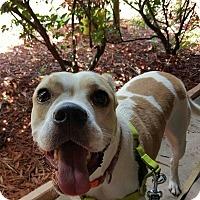 Adopt A Pet :: Clementine - Ormond Beach, FL