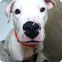 Adopt A Pet :: Aristotle (Ari) - Sylacauga, AL