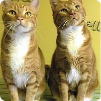 Adopt A Pet :: Georgie - Medway, MA