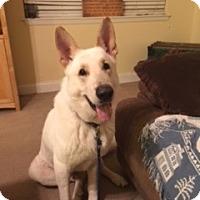 Adopt A Pet :: Atticus - Houston, TX