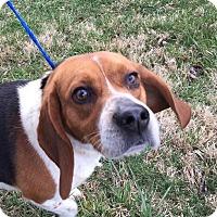 Adopt A Pet :: Jamison - Mooresville, NC