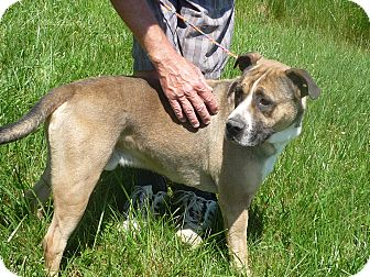 Labrador Retriever Mix Dog for adoption in Zanesville, Ohio - #179-13 ADOPTED!