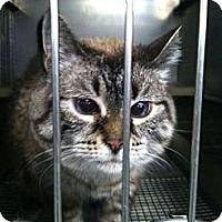 Adopt A Pet :: Jackie - Pittstown, NJ
