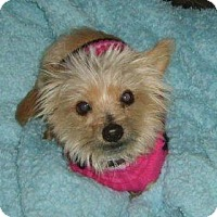 Adopt A Pet :: Rudy - Cleveland, OH